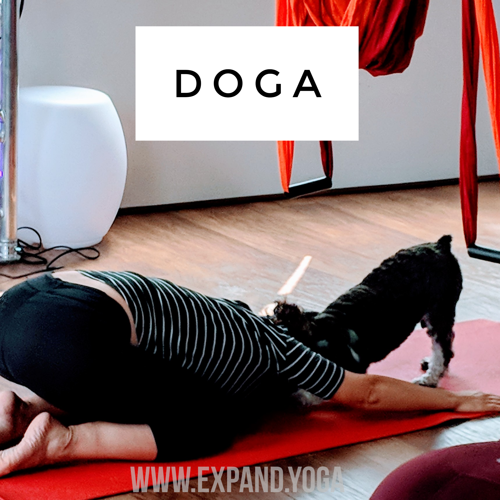 Expand DOGA Apr 15 (27)