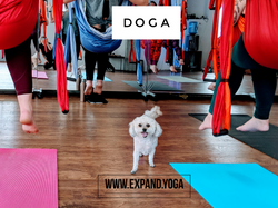 Expand DOGA Apr 15 (4)