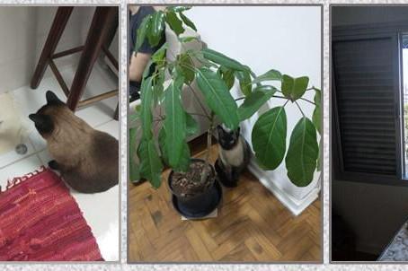 Meu aprendizado com Nino, meu gato.