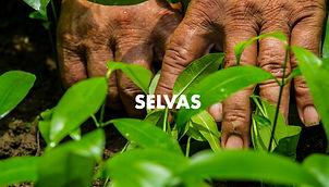 00021. SELVAS.jpg
