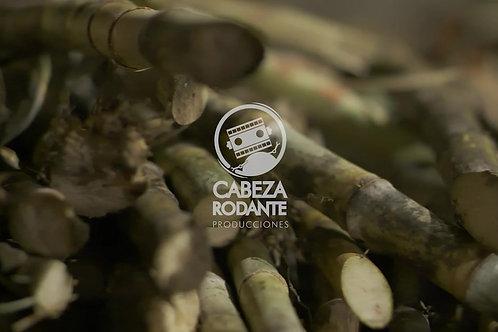 VD0173 - CAÑA DE AZUCAR