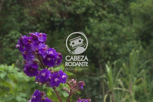 VD0074 - FLORES MORADAS