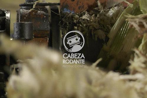 VD0199 - MOLIENDO CAÑA DE AZÚCAR