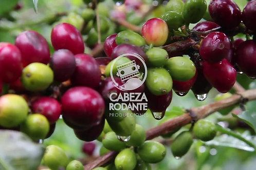 VD0091 - MATA DE CAFÉ