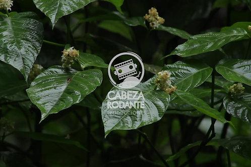 VD0063 - HOJAS