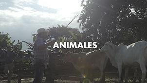 00027. ANIMALES.jpg