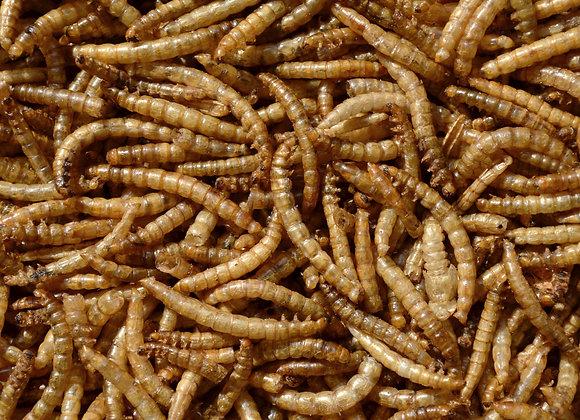 Vers de farine séchés