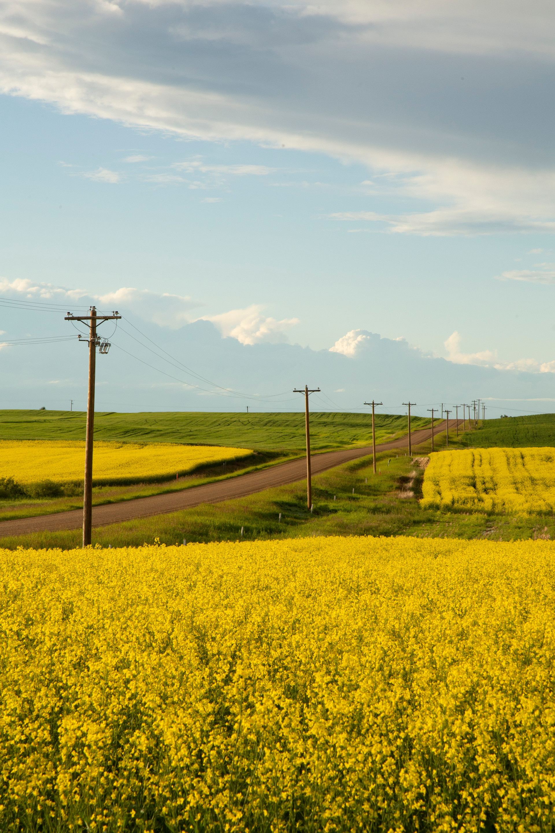 Alberta in the Summertime