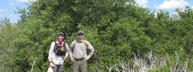 Mangrove Research