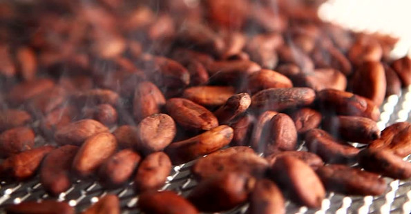 Schonend geröstete Kakaobohnen