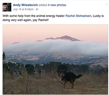 Lucky the dog recovered his energy after energy healing by Rachel Michaelsen, LCSW.