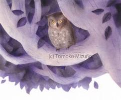 owl1-ss.jpg