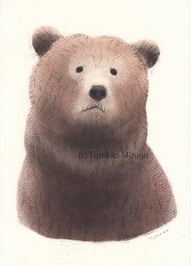 bear-ss.jpg