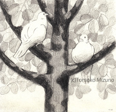 pegion-in-tree-ss.jpg
