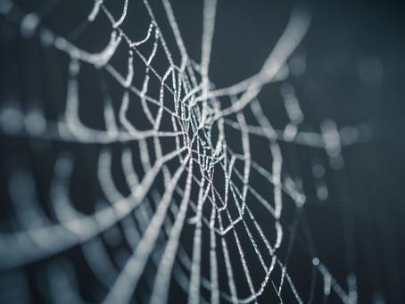 Een spin in de morgen brengt kommer en zorgen.