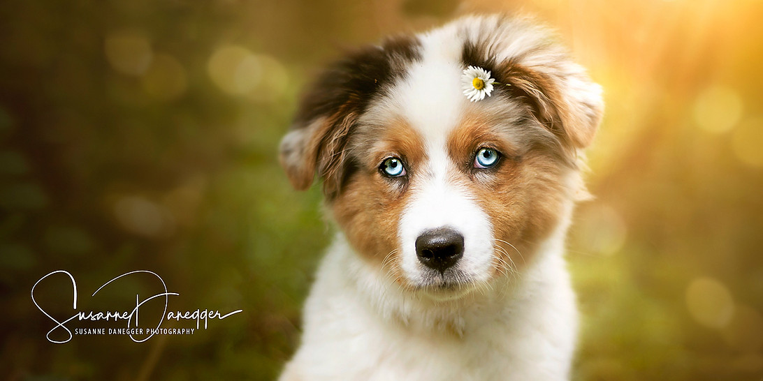 Feline-Blume.jpg