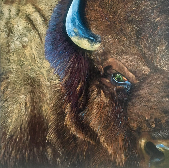 Bare Buffaloing; to intimidate simply