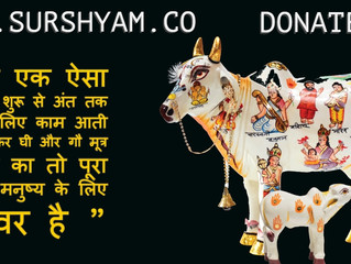 Cow's Importance in our Life - Sur Shyam Gaushala