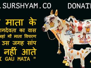 NaagDevta In Gau Mata - Sur Shyam Gaushala