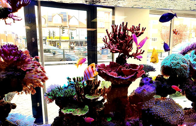 Aquatic fanatic reef aquarium