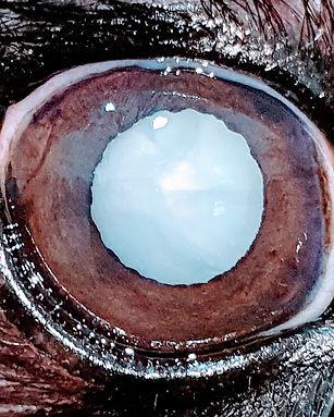 Catarata hipermatura_2.jpg