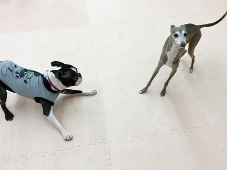 ドッグトレーニングにおける「Animal Welfare」-Vol.07