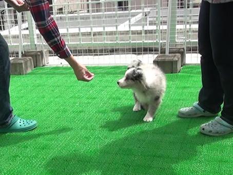 仔犬を迎えたら、何を教える?- Vol.02