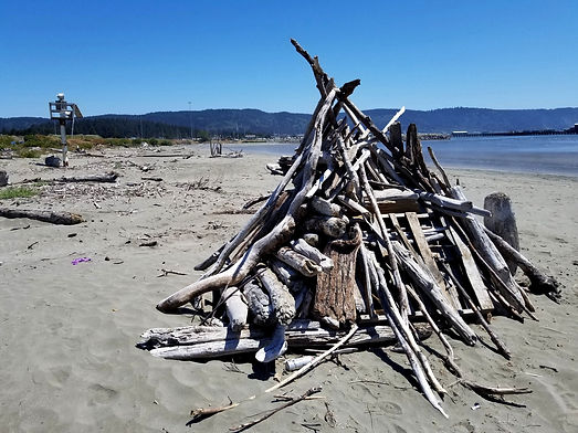 A fort made of driftwood set on the beach