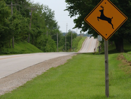 Deer & Driving Safety Tips