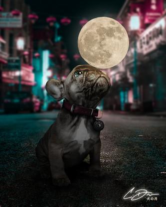 Dog's Moon