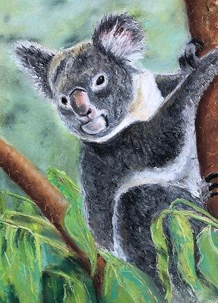 Sue Koala.jpeg