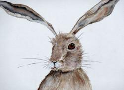 Hettie Hare