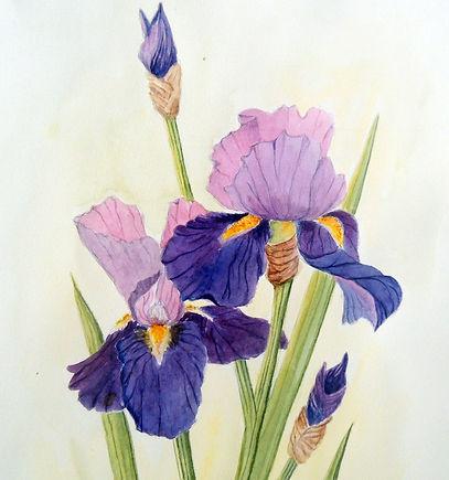 Lyn Armstrong irises.jpg