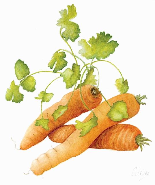 Carrots & Coriander