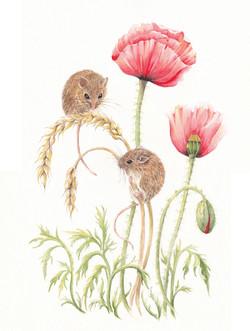 Havest Mice
