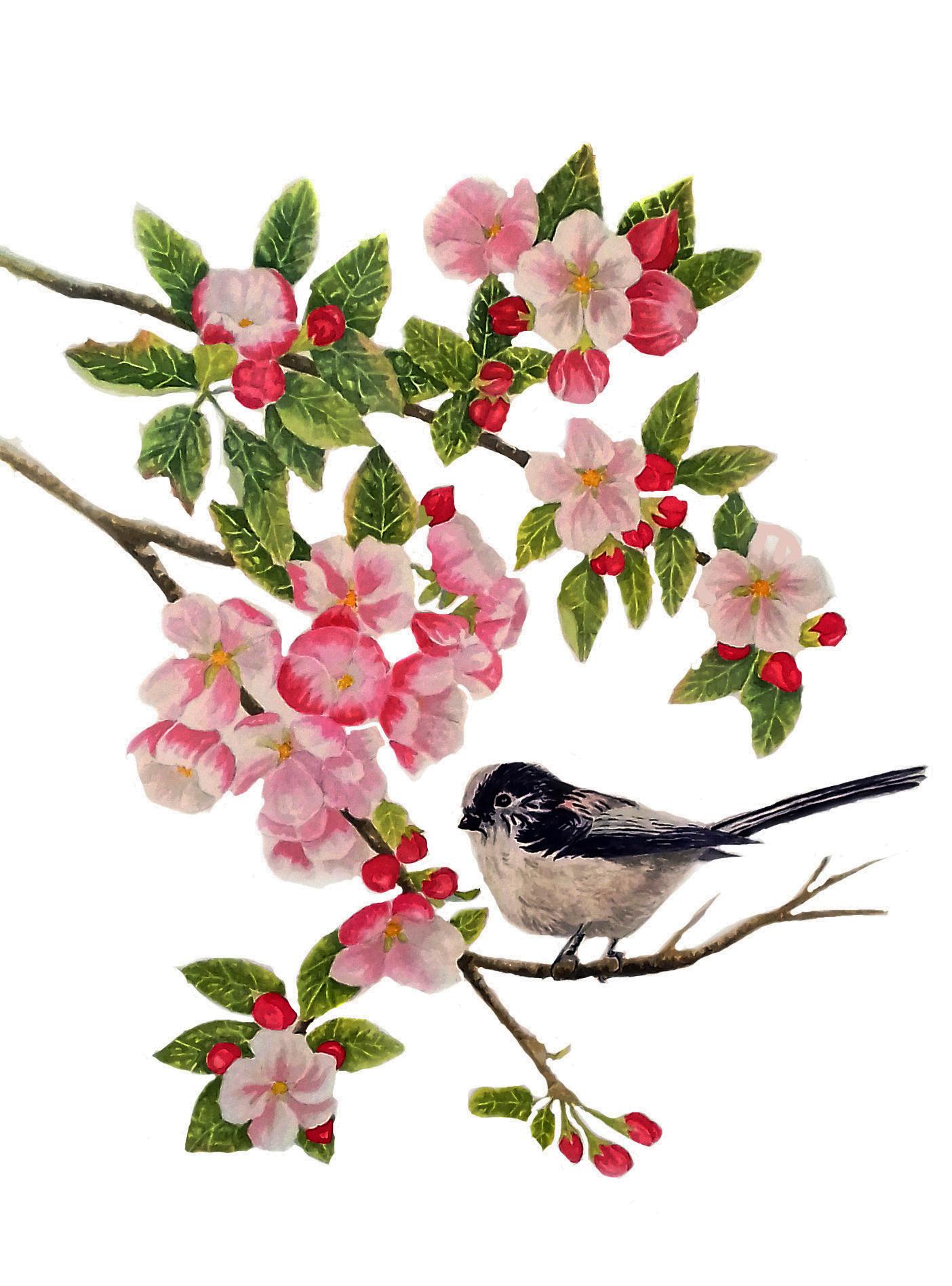 Amongst the Apple Blossom