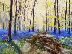 Bluebell Woods at Dawn