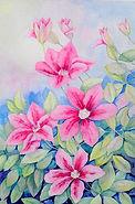 Pam Hague Pink clematis.jpg