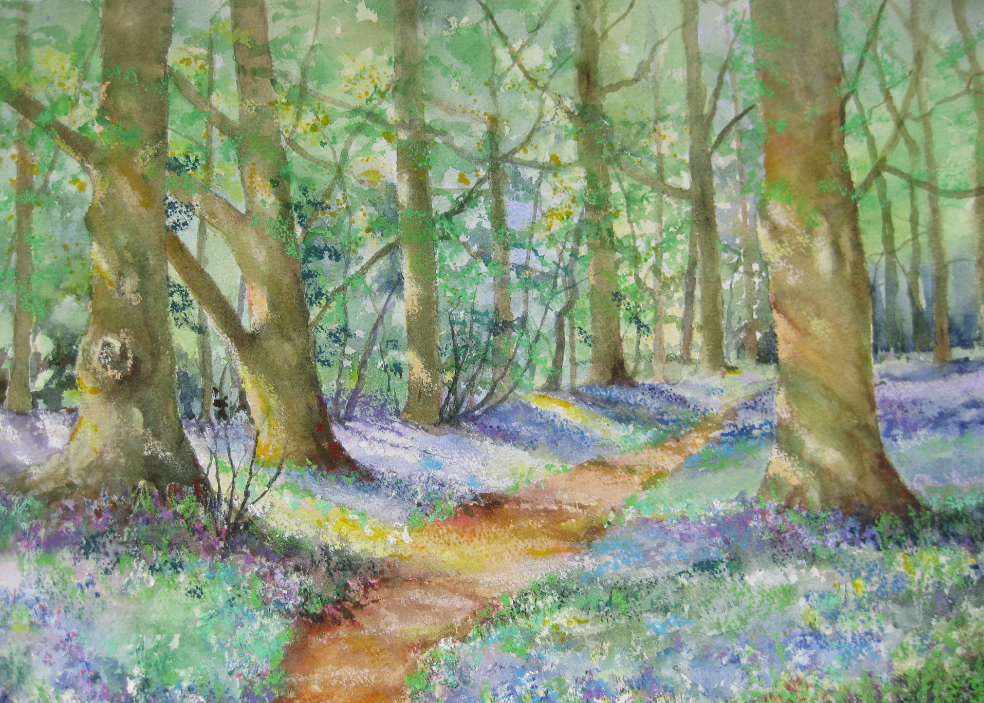 Bluebell time in Badbury Clump