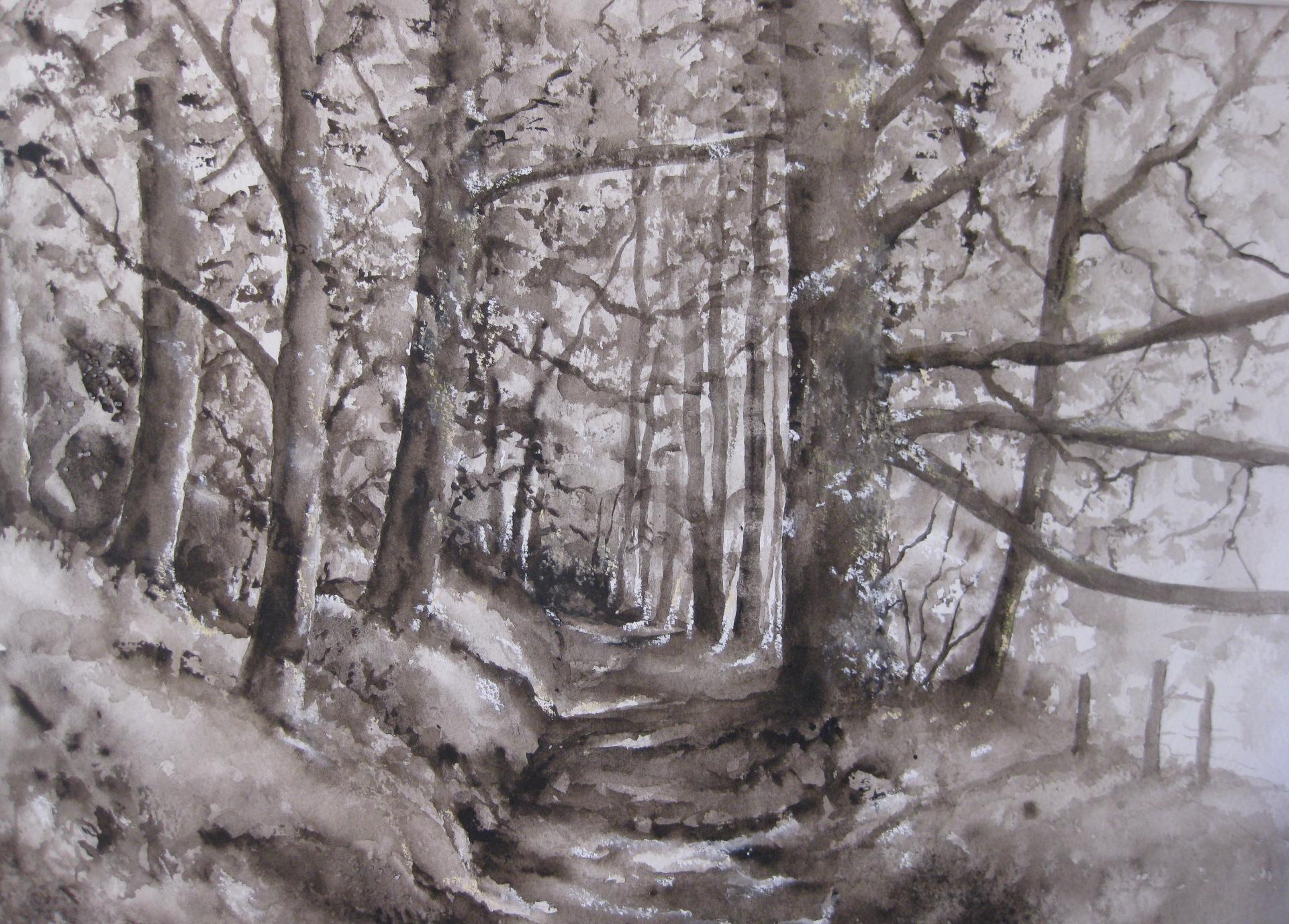 Walk Through The Trees In Exmoor