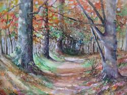 Autumn in Savernake
