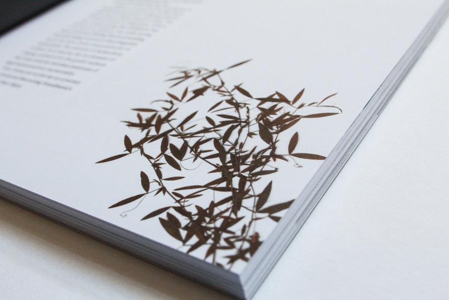 Smultron – Detail: getrocknete Pflanze