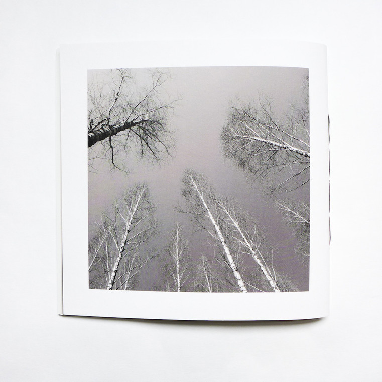 Between the Birch Trees – Rückseite