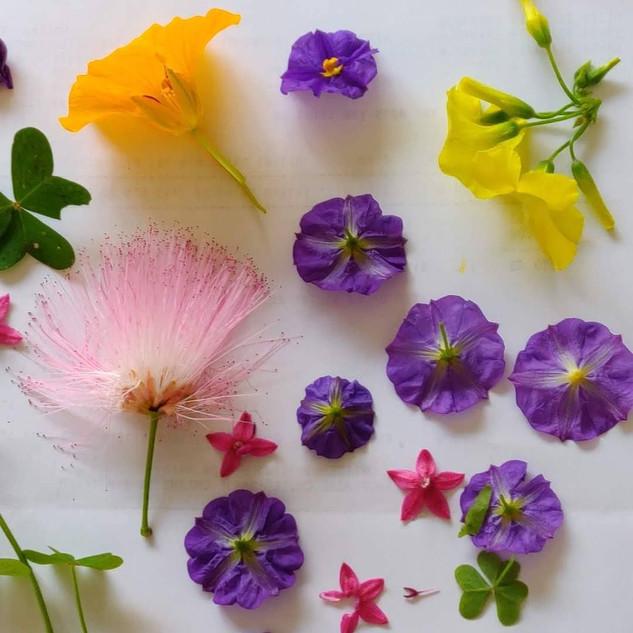 ייבוש פרחים