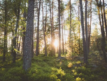 Zanimljivosti o Švedskoj - odaberi besplatni studij!