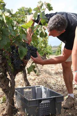 Vignobles Prissette