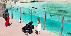 ZSL London Zoo reopens to the public