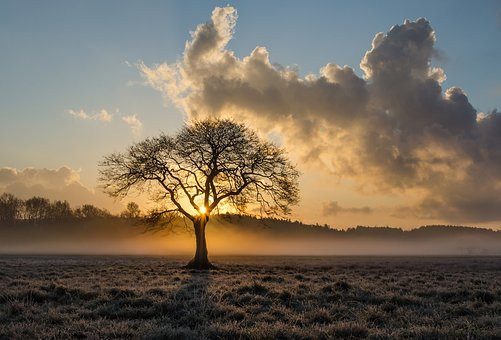 Lone Tree, Clouds, Mist