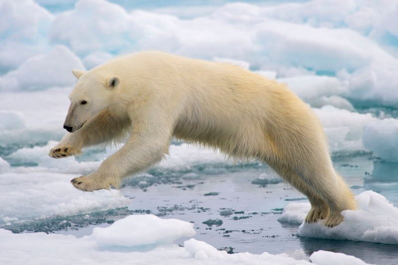 photo of polar bear jumping on ice