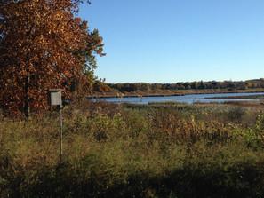 Cherokee Marsh Regulates Water Flow to Yahara Lakes and Provides Habitat for Native Wildlife
